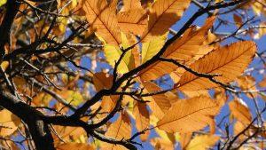 Kastanje herfst